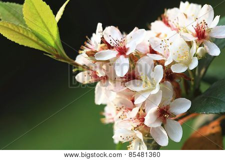 White flowers in spring