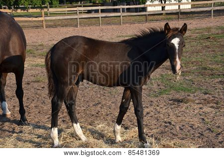 Young Bay Colt