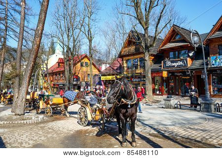 Horse At Krupowki Street In Zakopane, Poland