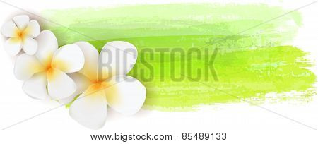 Plumeria On Watercolor Banner