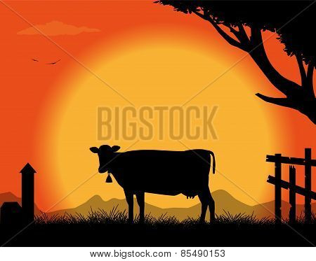 silhouette of the cow in the sunset