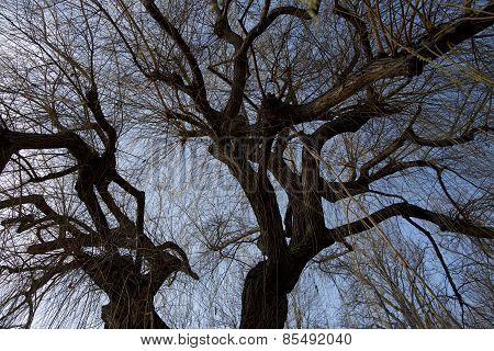 Tree Trunk And Branches