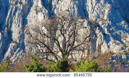 Naked tree with mountain background