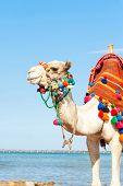 stock photo of camel  - White camel standing on the Egyptian beach - JPG