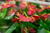picture of flower shop  - Beautiful Tropical Flowers in a Flower shop - JPG