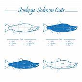 stock photo of redfish  - Sockeye Pacific salmon cutting diagram illustration blue on white background - JPG
