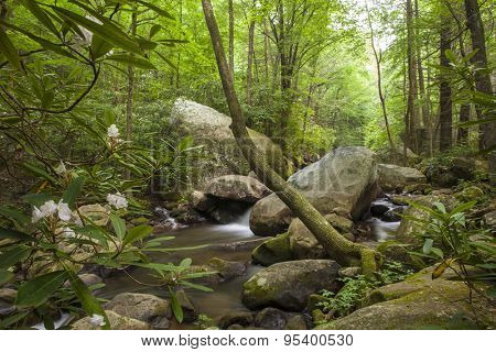 cascade flowing through lush forest with rhododendron flowers