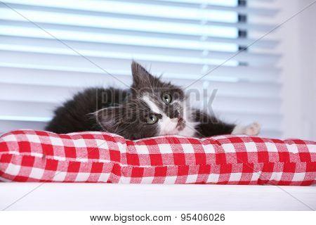 Cute gray kitten on windowsill at home
