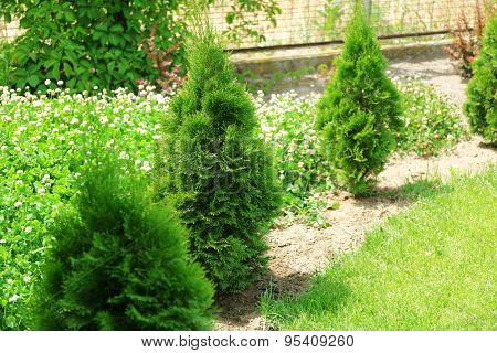 Beautiful view of yard with green grass and bushes