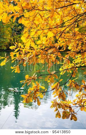Golden oak tree leaves against small pond at an autumn park