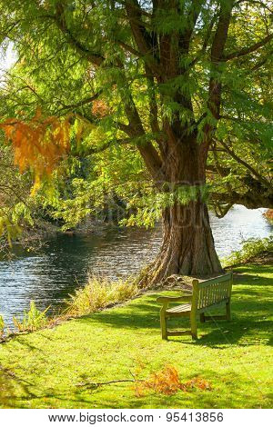 Wooden bench under the tree facing small pond in the Royal Botanic Gardens in London