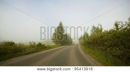 Rural road in morning fog in the summer