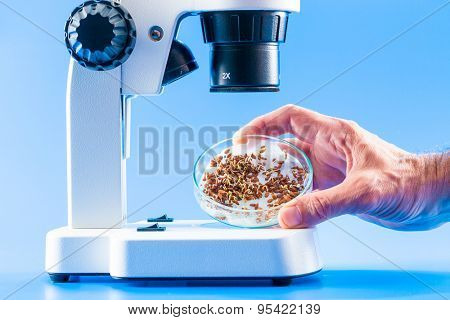 sprouts seeds in a Petri dish under a microscope