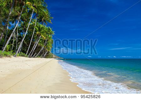 Deserted tropical beach with palm trees in north Queensland, Australia
