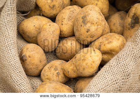Potatoes in rustic burlap sack