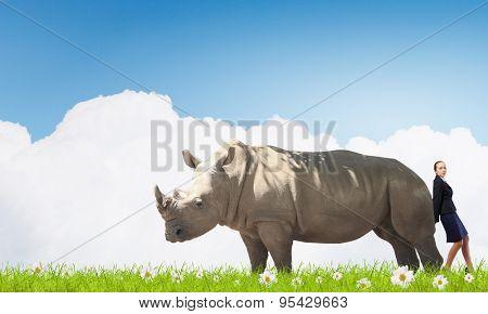 Businesswoman making effort to move huge rhino