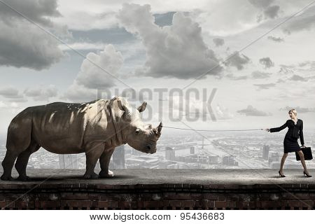 Young businesswoman with suitcase walking with rhino on lead