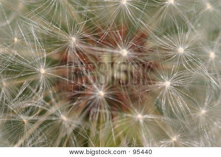 Seeds Galore