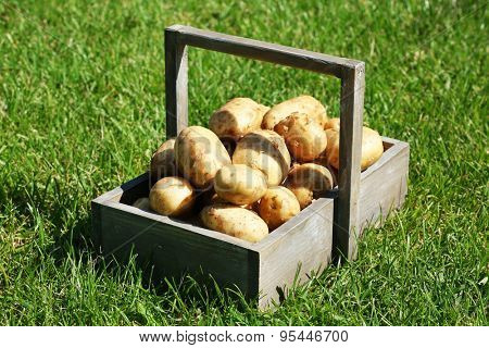 New potatoes in wooden crate over green grass background