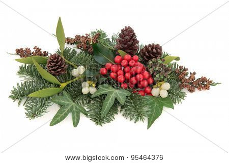 Christmas and winter flora with mistletoe, holly and red berries, ivy, spruce fir and cedar cypress over white background.
