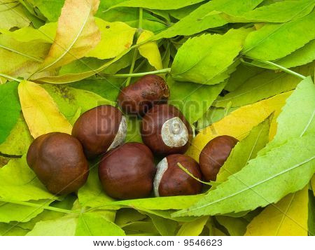 Some Chestnuts