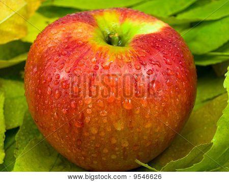 One Apple On Foliage