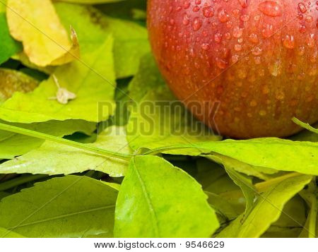 Foliage And Apple On It