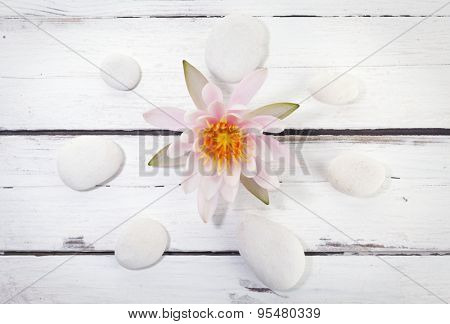 pink water lily in the center of pebbles circle on rustic white surface