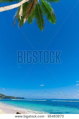 Panorama Tranquility Palms