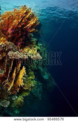 Underwater shot of the coral reef wall with lots of bright corals and tiny fish