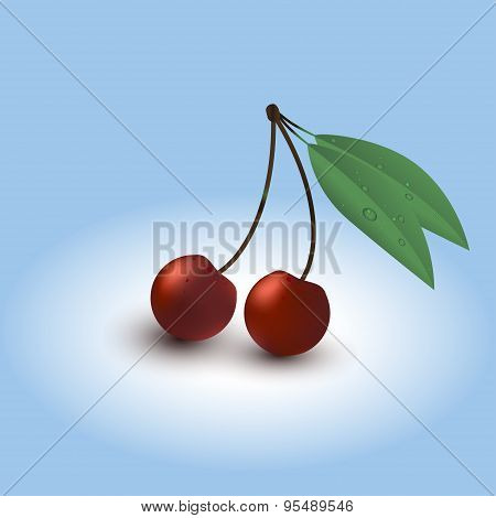 Two ripe cherry with leaves and dewdrops.