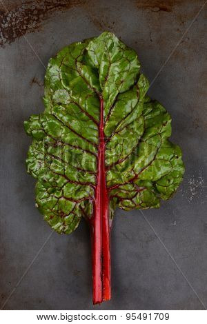 A single stalk and leaf of organic red chard on a metal baking sheet. Vertical Format.
