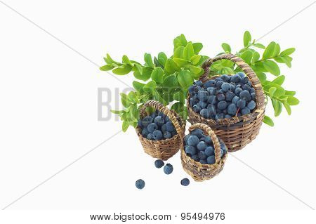 Wild Blueberries In Three Wooden Baskets Isolated On White