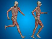 stock photo of male body anatomy  - Concept or conceptual 3D human man or male skeleton anatomy transparent body over blue gradient background - JPG