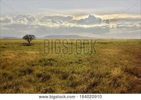 African savannah at sunset. Lonely tree. Tanzania.