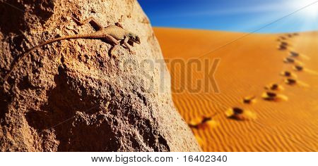 Desert lizard on the rock against sand dune in Sahara Desert