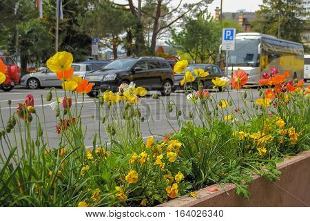 Flower bed with flowers beside the road with cars