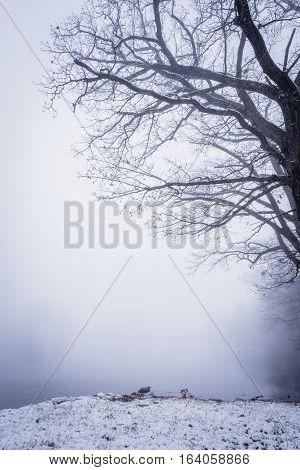 Heavy Fog Over The Winter Frozen Pond