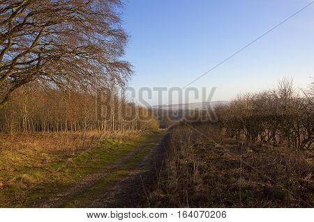 Woodland Footpath In Winter