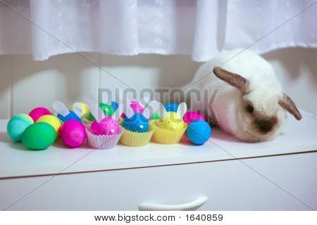 Imposter Rabbit