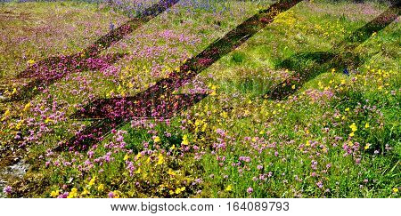 Shadows of three crosses on a field of wildflowers.