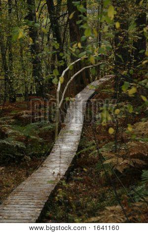 Wooden Walkaway