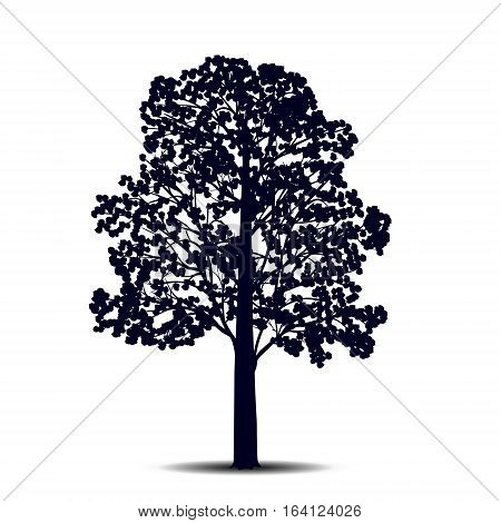 silhouette detached tree linden with leaves on a white background