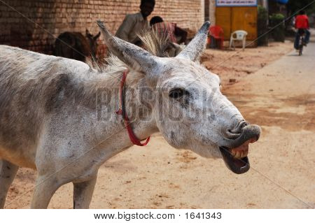 Happy Donkey
