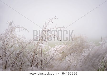 Hoar frost on the grass giving beautiful texture in misty landscape