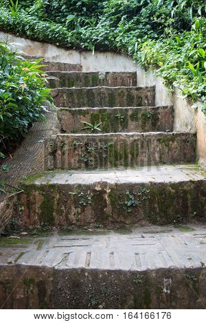 Stairway to jungle in the garden stock photo