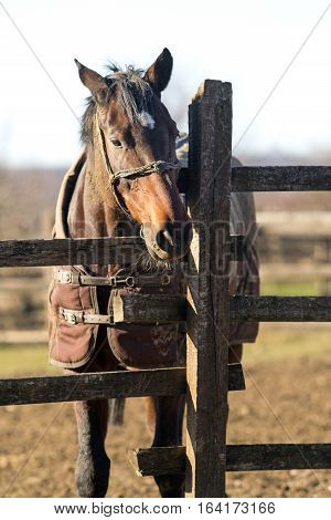 Purebred warm blood mare looking over fence on a cold winter day. Sunny winter day on a horse farm horses wearing blankets. Check out my another equine photos please