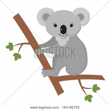 Furry koala living on the tree. Element for any kind of design
