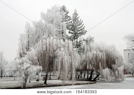 Trees in the white hoarfrost next to a pond in Litovel, Czech Republic