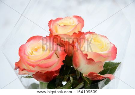 Bouquet composed of three colors of multicolor roses.